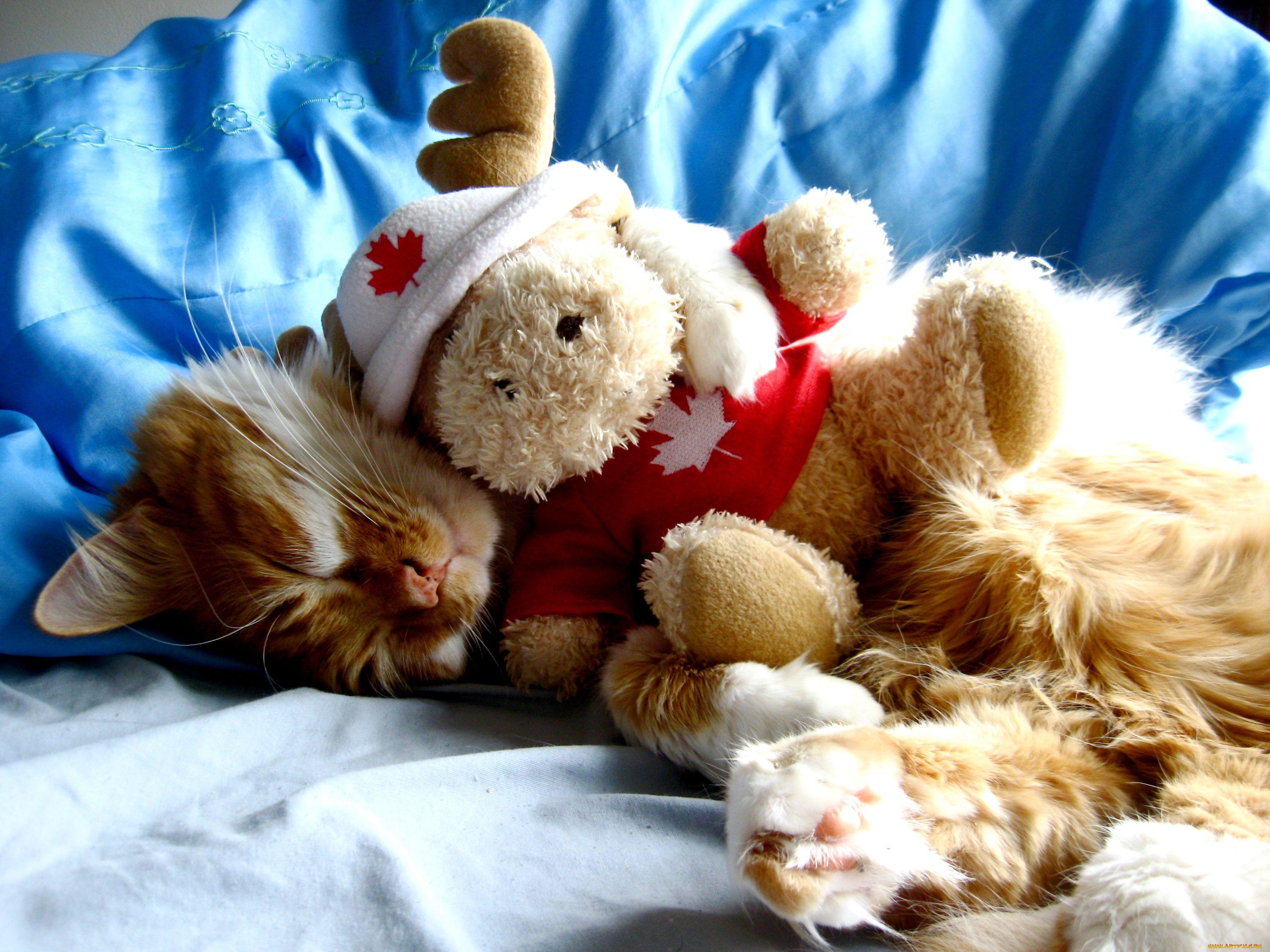 коты с игрушками фото рецепт